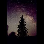 Celestial Tree